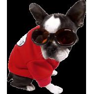 Doggles Solbriller ILS