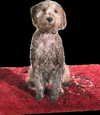 Dog Gone Smart Matte Grå