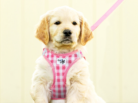 Curli Puppy Set Hundesele Y-sele Pink Routes