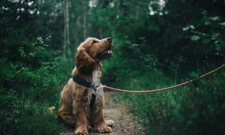 Huggormbitt og hund – når uhellet er ute