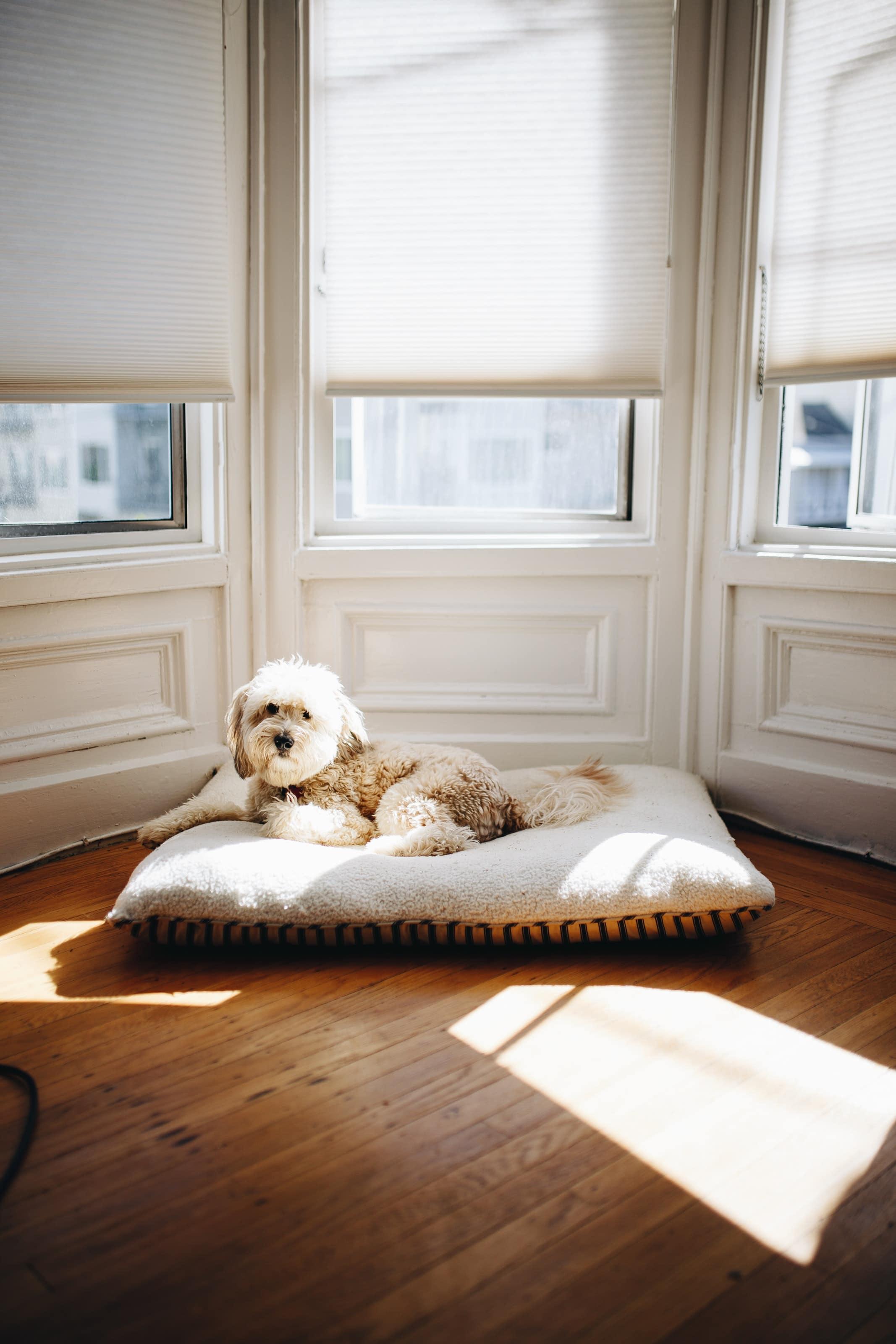Hundeseng - åpen ved vinduet