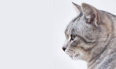 Hvor gammel kan en katt bli?