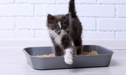 5 nyttige måter å bruke kattesand