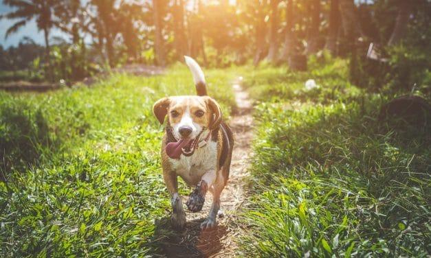 6 tips for hjernetrim med hund