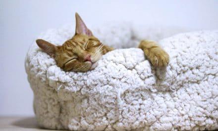 Hvorfor du bør ha katteseng