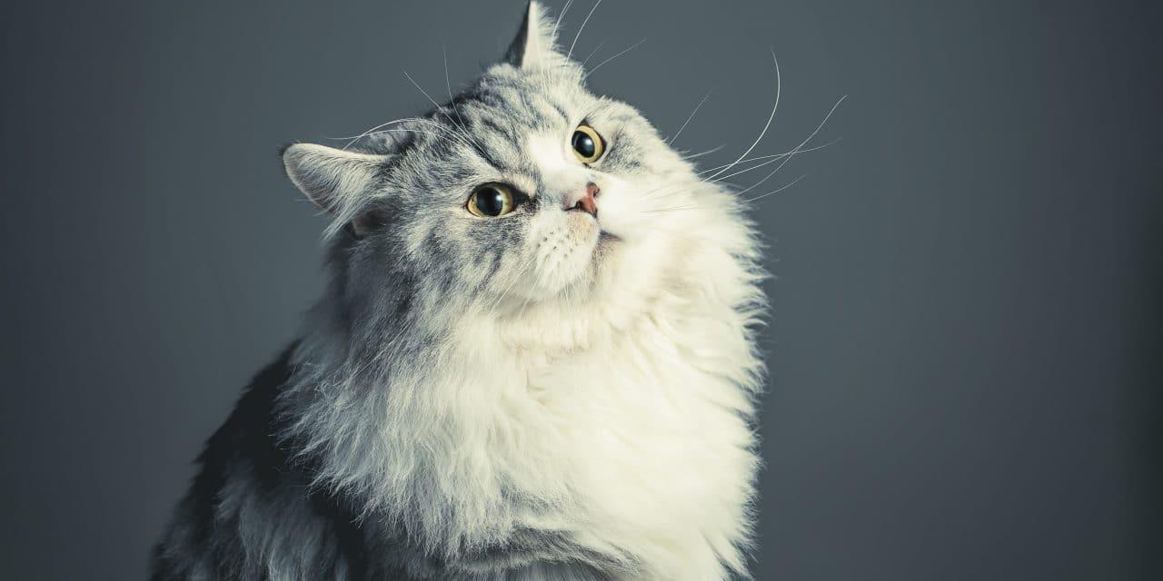 Dette katteutstyret trenger du til katten din