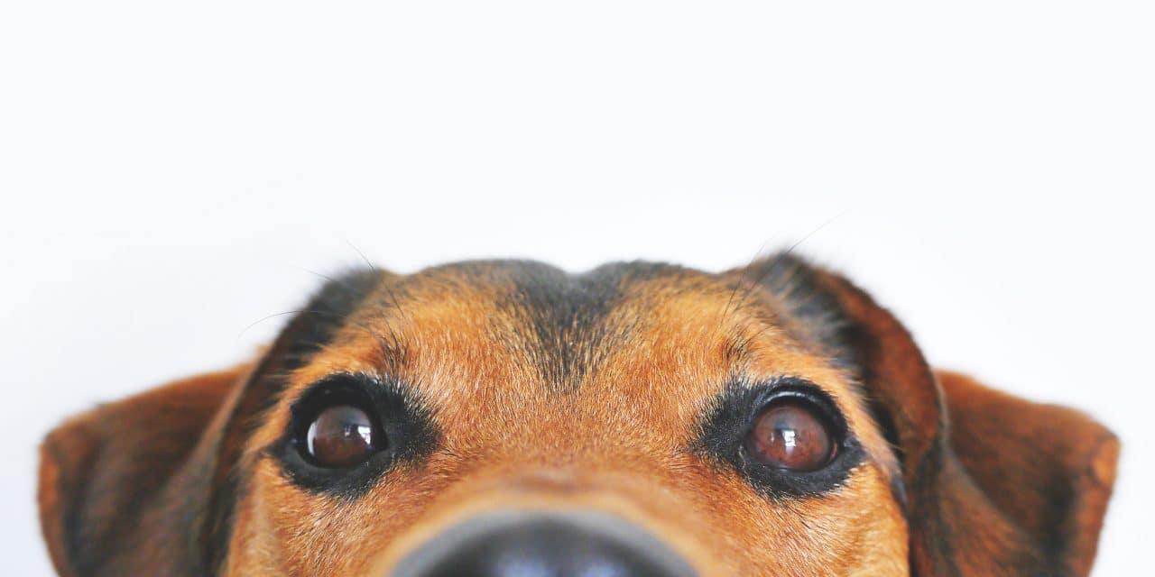 Dette hundeutstyret skal du vurdere