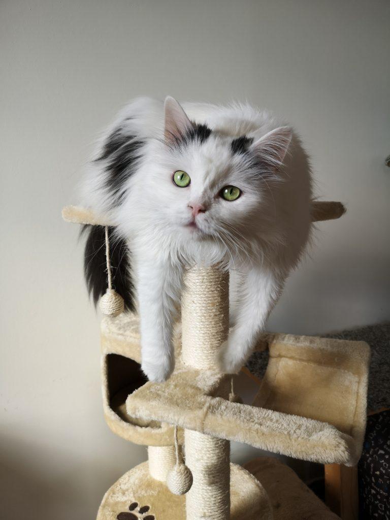 Klorestativ er et viktig katteutstyr