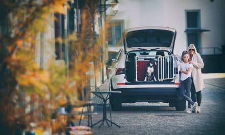 Hundebur til bil – slik sikrer du hunden