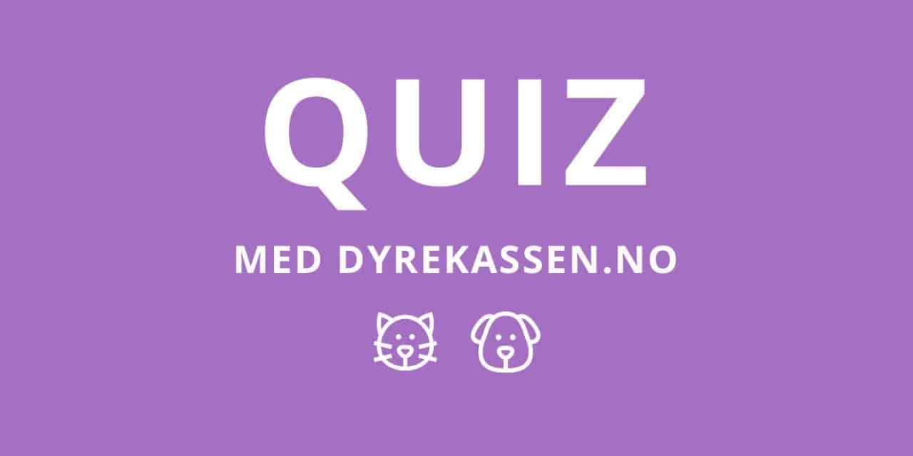 Quiz | Kjenner du disse hunderasene?