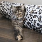 5 typer katteleker du må kjenne til