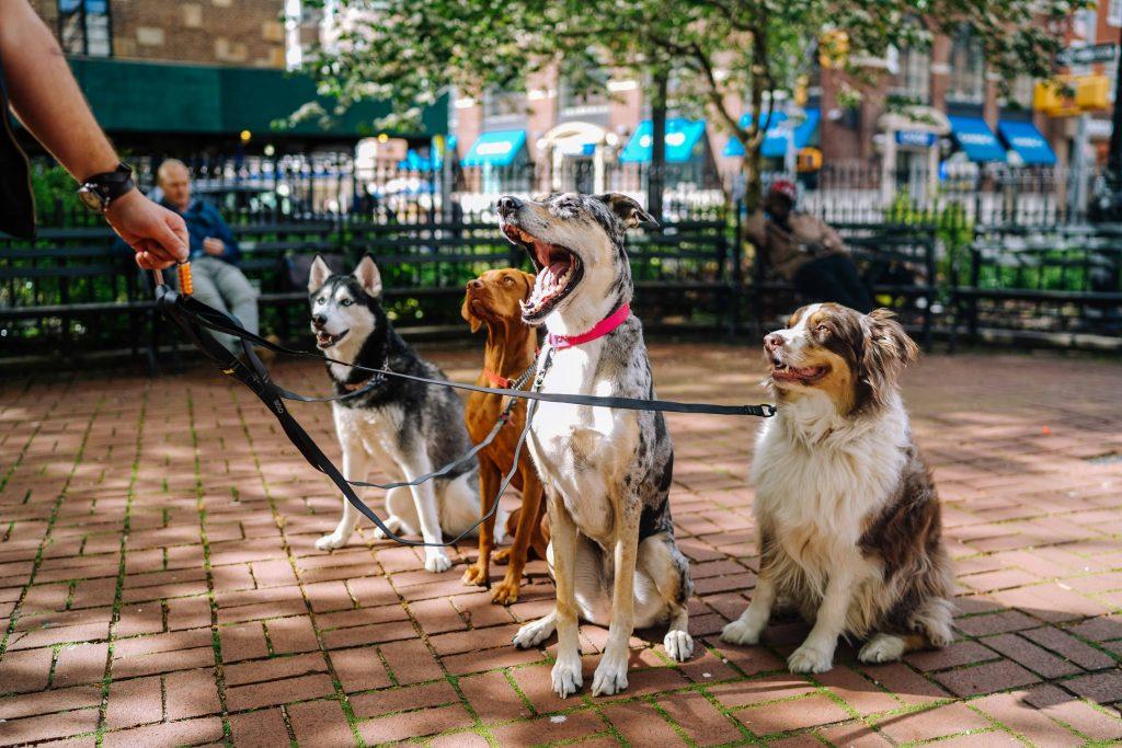 Tur med hund kan være utfordrende for både eier og firbent.