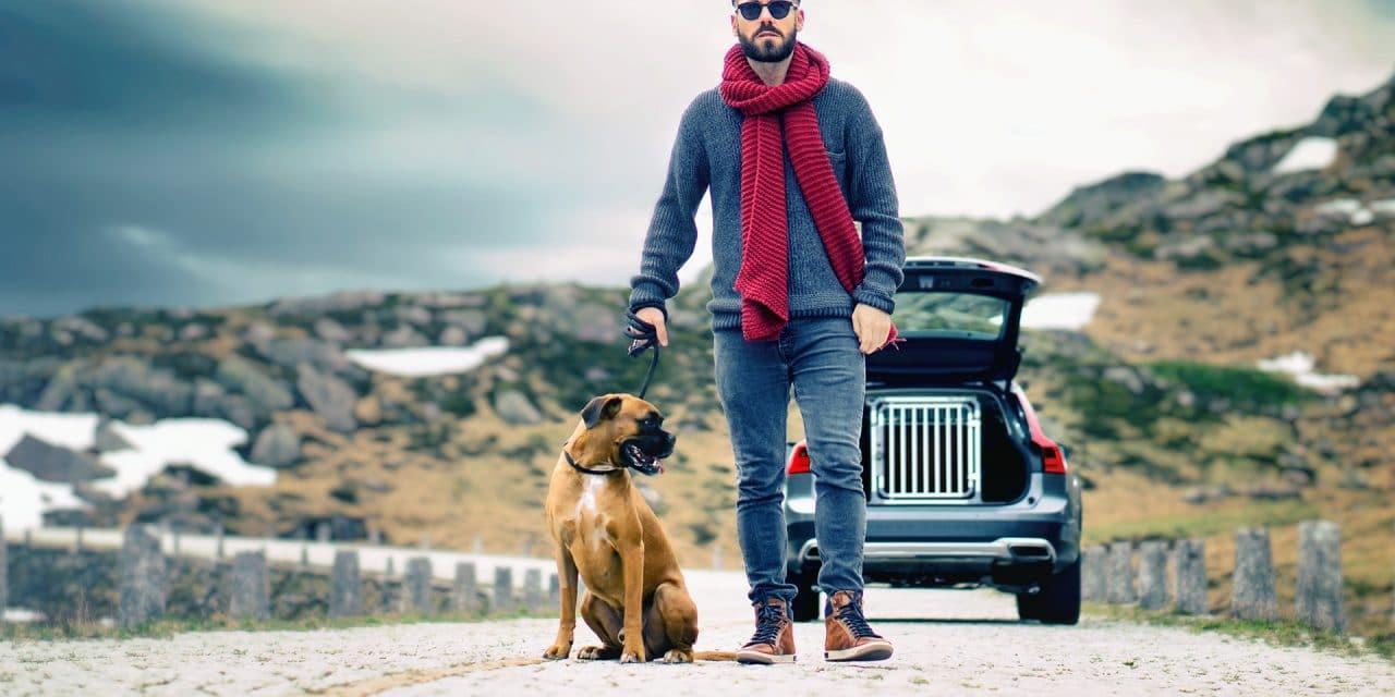 På tur med hund i bil