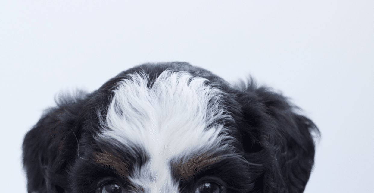 Last ned hundebakgrunner til mobil