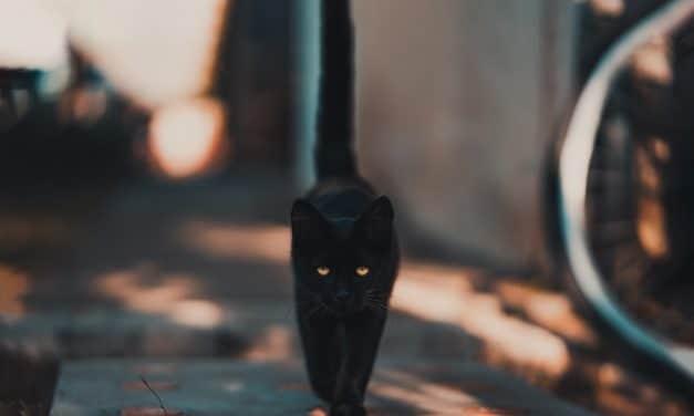 14 kattemyter som ikke stemmer