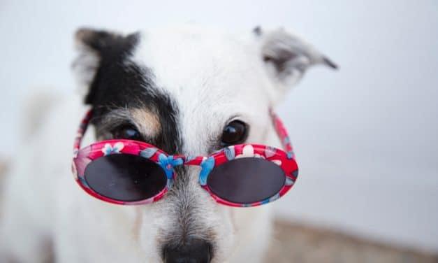 9 hunder alle elsker på Instagram
