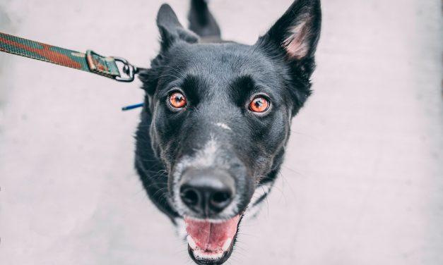Tur med hund – løsningen på 5 problemer