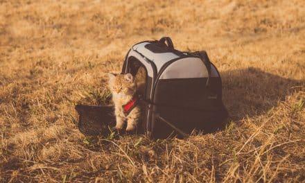 Enkle tips om kattebur