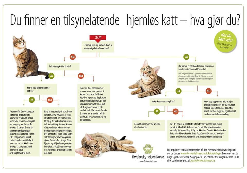 Dumping av katt - Dyrebeskyttelsens informasjon