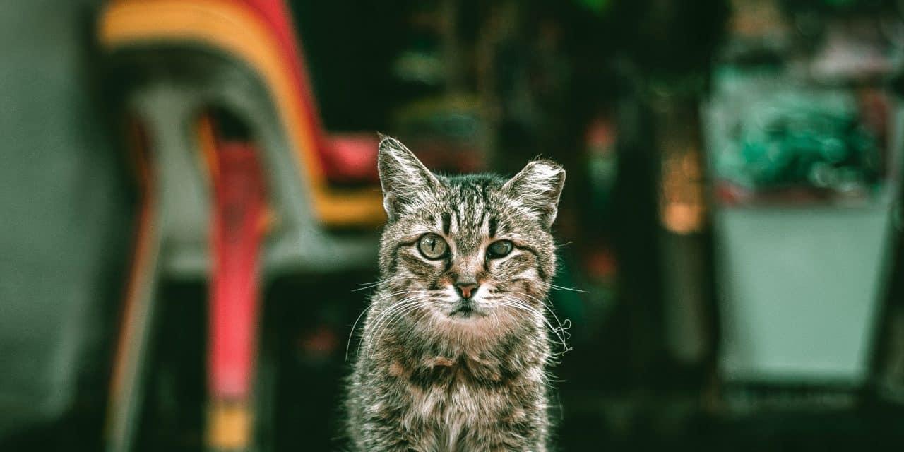 Dumping av katter – et voksende problem