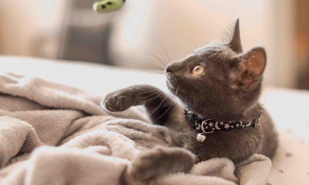 9 svar om kattemynte