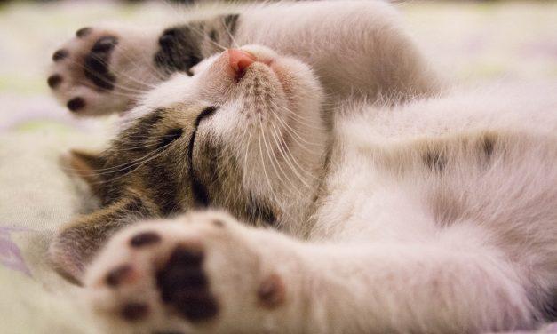 Slik får du kattunger til å bruke kattedo