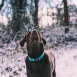 Kan hunder fryse?