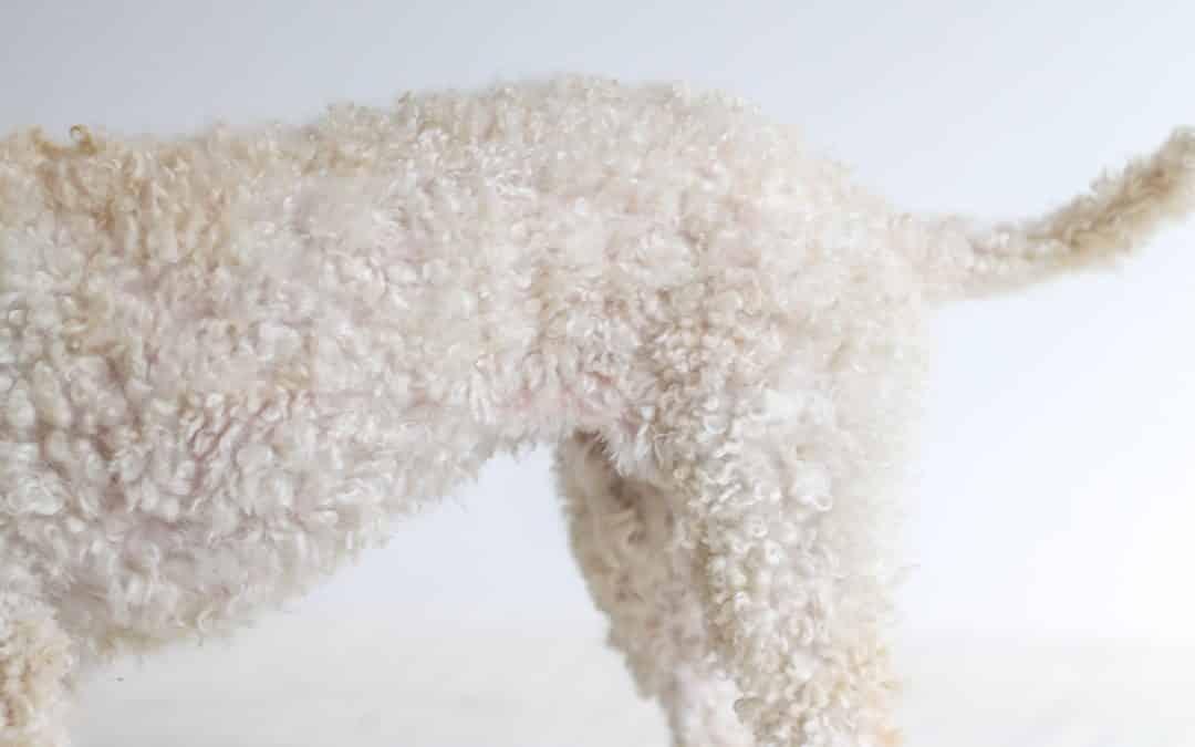 Pelspleie for 4 typer pels