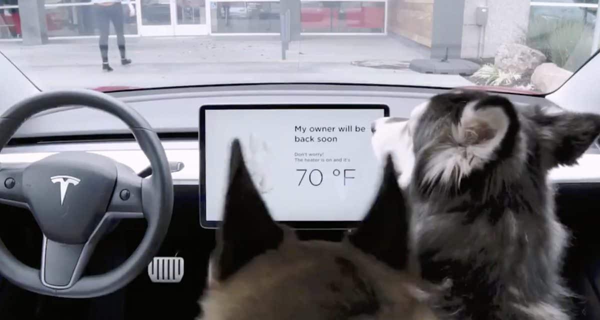Problemer med Tesla Dog Mode