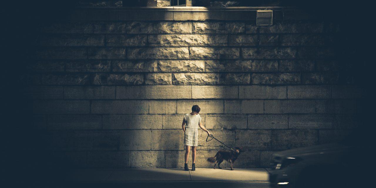 Refleks og trafikksikkerhet for kjæledyr