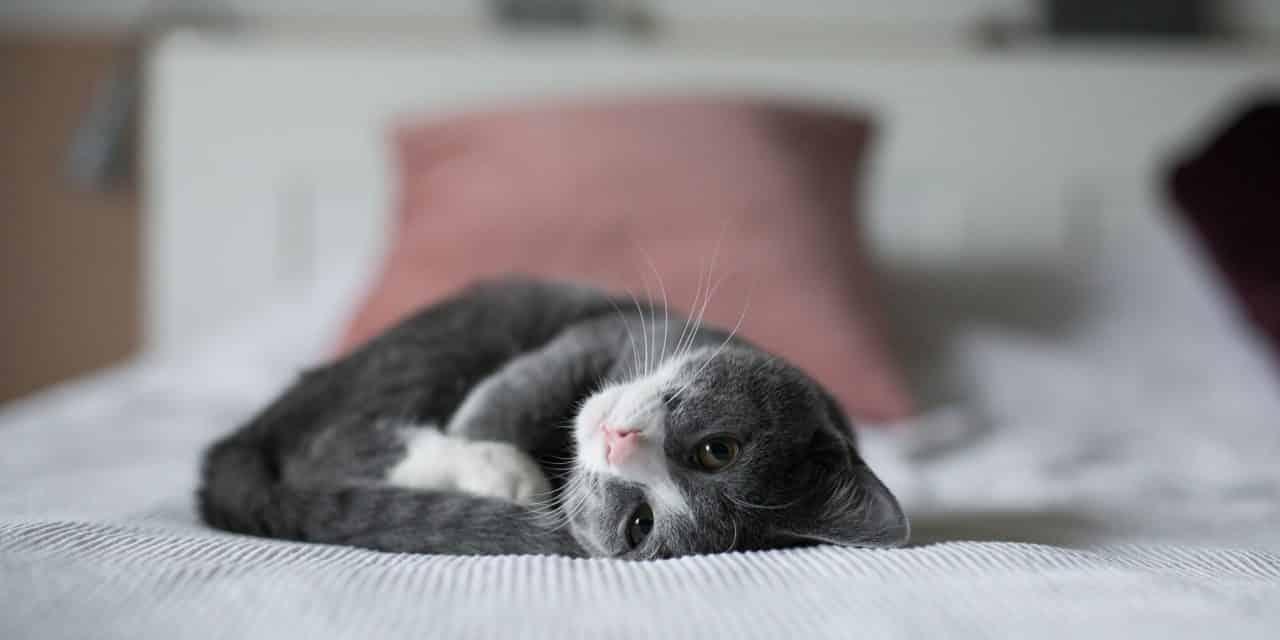 8 ting å tenke på når du skal oppdra en kattunge