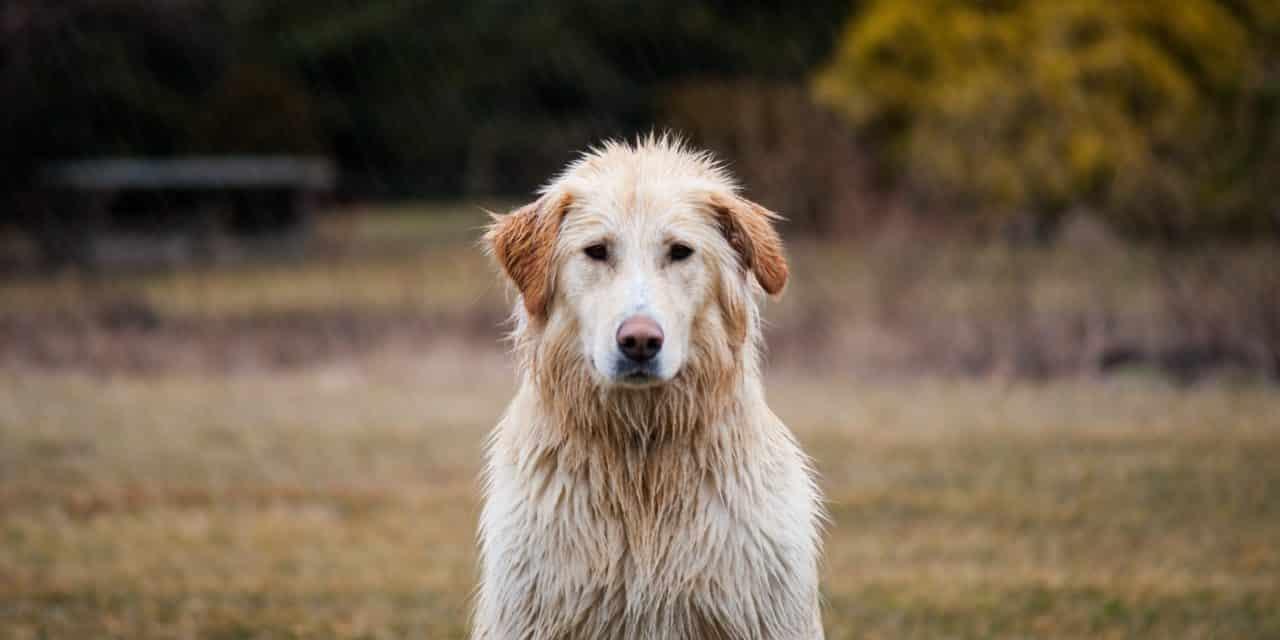 Hundedekken mot regn og kulde