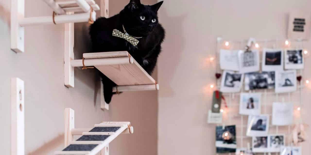 Hvorfor elsker katter høyde?