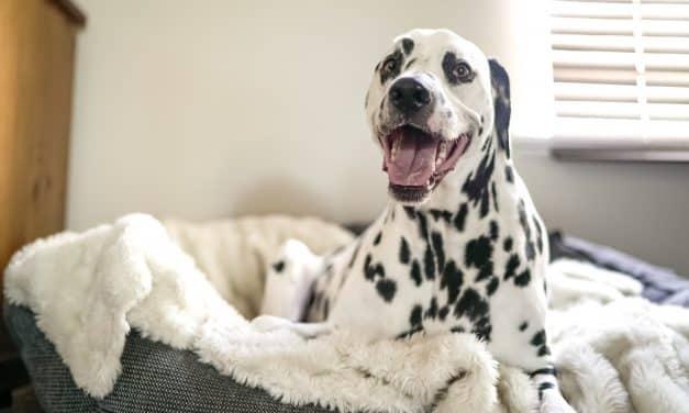 Slik velger du hundeseng – tre gode tips