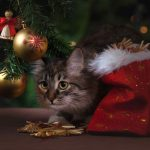 Julegaver til katt – våre ekspertråd