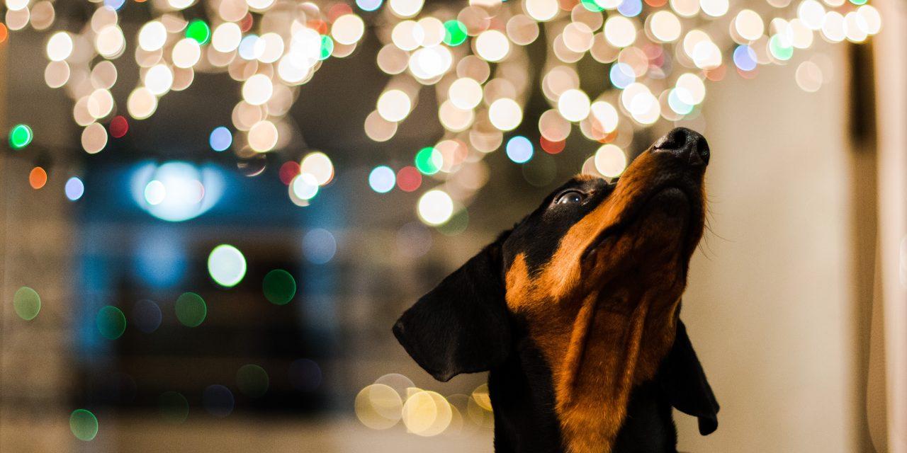 Julegaver til hund – våre råd