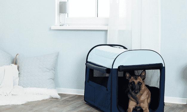 Hundebur i stoff | Dette må du vite