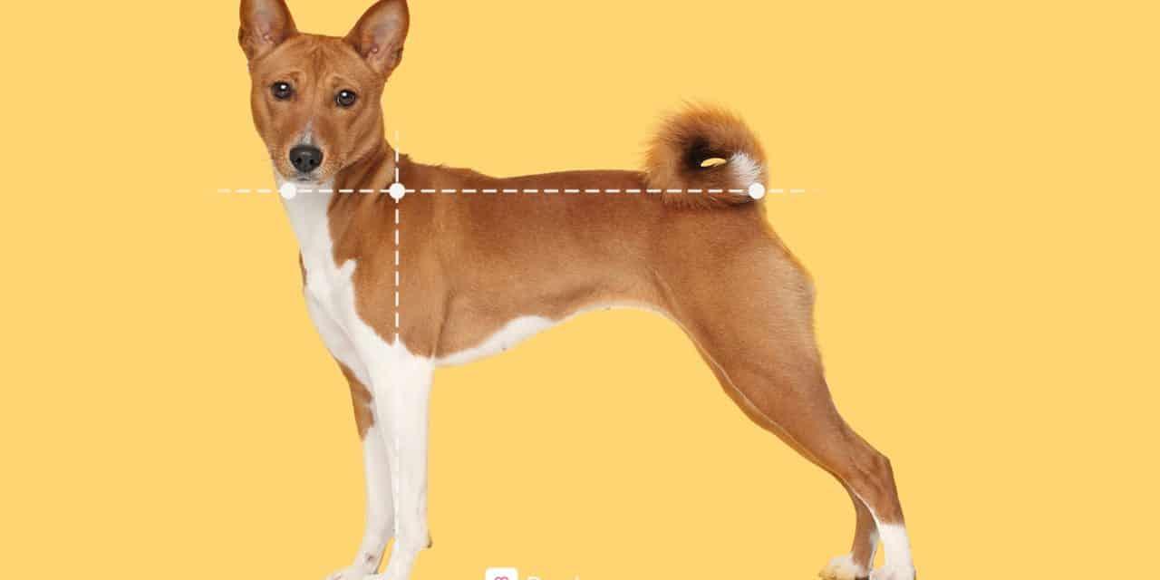 Hundebur størrelse | Slik velger du riktig bur til bilen
