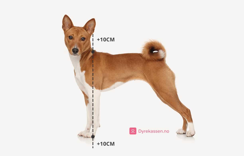 Riktig størrelse hundebur - måle høyde