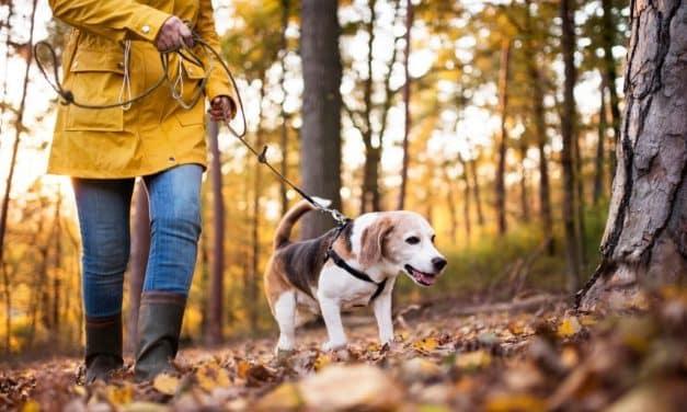 Lære hund å gå i bånd | Slik gjør du det