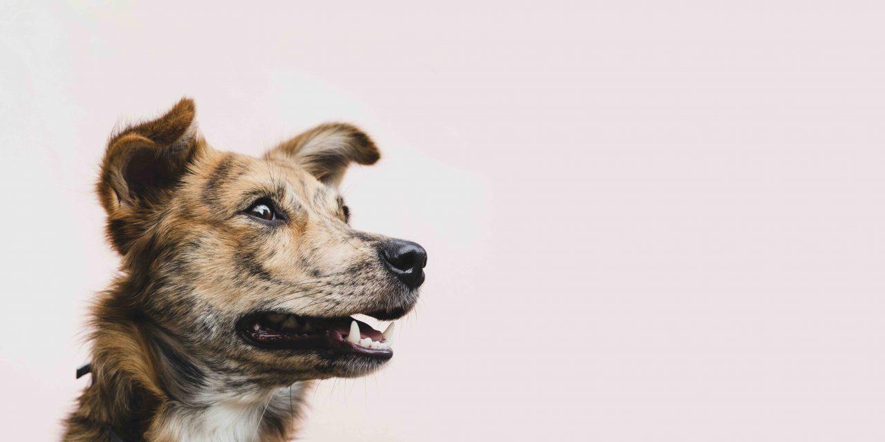 14 ting du kanskje ikke visste om hunder