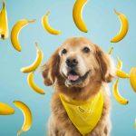 9 typer frukt hunden din kan spise