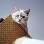 Klorestativ til katt – hvorfor du trenger det
