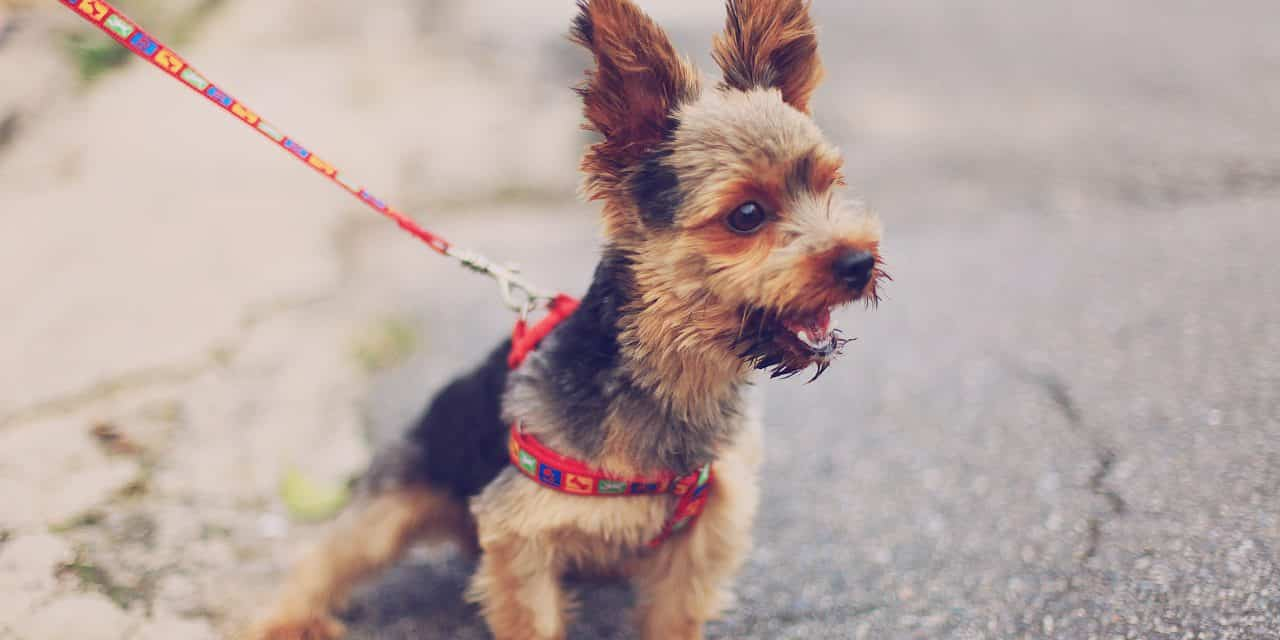 Båndtvang for hund i Norge