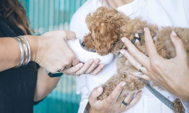 Forsikring av hund