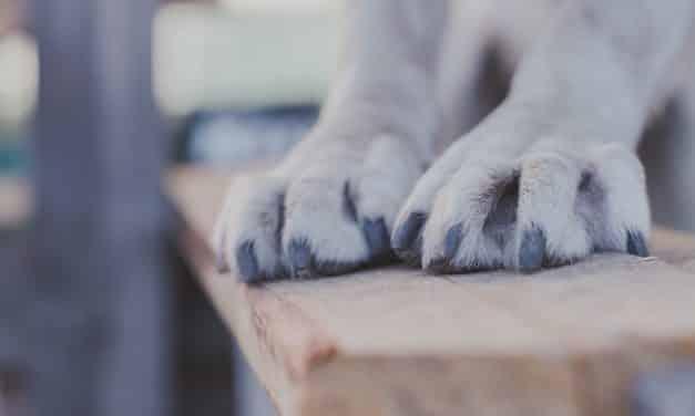 Klippe klør hund | Slik gjør du det