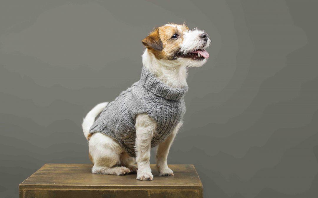 Klær til hund | Bestill hundeklær på nett