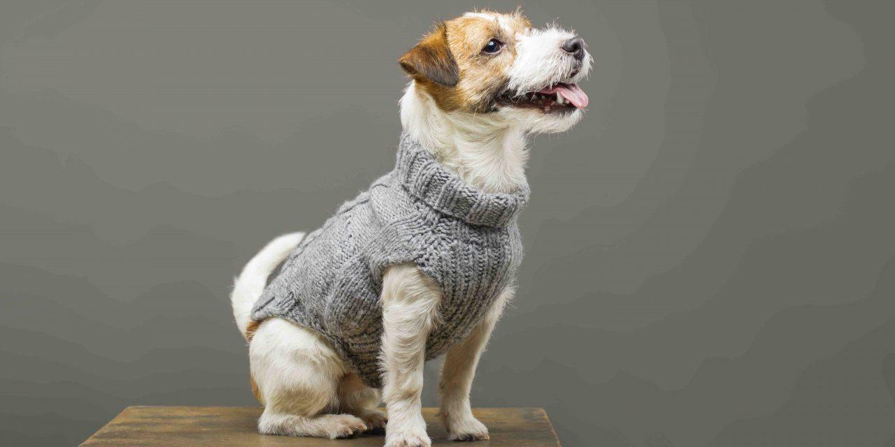 Klær til hund   Bestill hundeklær på nett