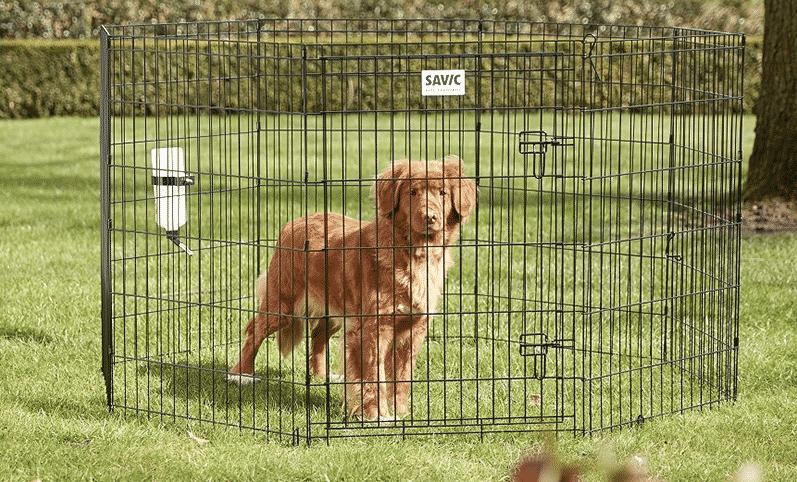 Hundegård | Innendørs og utendørs